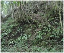 Forêt et ravin de pente - 9180
