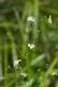 C3.24 - Communautés d'hélophytes non graminoïdes (de taille moyenne)