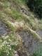 Communauté à espèces annuelles et succulentes sur calcaire [copyright Wibail Lionel]