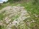 E1.11 - Communautés à espèces annuelles et succulentes des substrats rocheux (détritiques) thermophiles (+/- calcarifères)