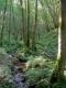 Aulnaie des ruisseaux de source [copyright Wibail Lionel]