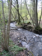 Aulnaie-frênaie des cours d'eau rapides