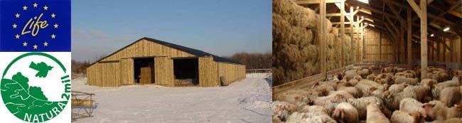 La bergerie et les moutons roux ardennais à Marche-en-Famenne