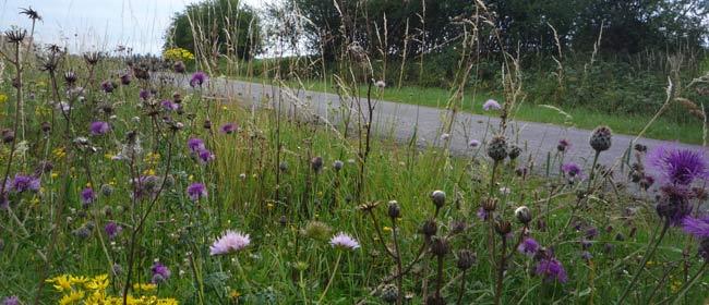 Biodiversité Bords de routes Wallonie