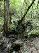 Boyeria irene habitat Rio Nora Asturies.JPG