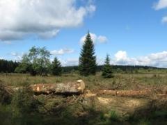 C1e arbres ébranchés et coupés en tranches.JPG