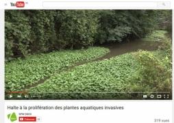 Capsule vidéo sur les plantes aquatiques invasives