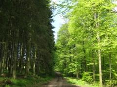 Colloque Code forestie_2