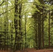 Colloque foret et biodiversité.jpg