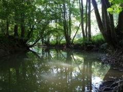 Forêt alluviale linéaire dégradée [copyright Wibail Lionel]