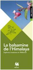 La balsamine de l'Himalaya