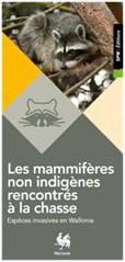 Les mammifères non indigènes rencontrés à la chasse