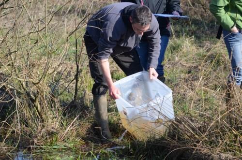Monitoring amphibiens - RND du Pré des Forges - 2014