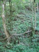 Erablaie-ormaie ardennaise