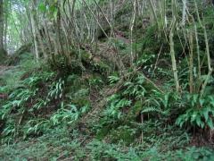 G - Forêts et plantations