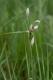 D2.26 - Bas-marais à [Eriophorum angustifolium]