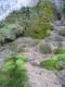 Falaise intérieure suintante - source calcaire incrustante - Tuf - Comblain.JPG