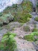 H - Habitats sans végétation