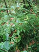 Flore marécageuse acidophile