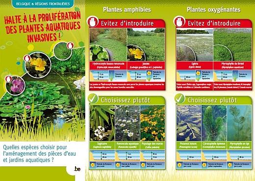 plante aquatique belgique