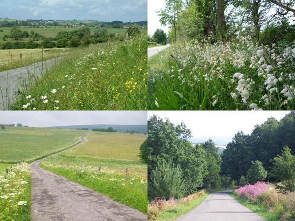 Fonction paysagère des bords de routes