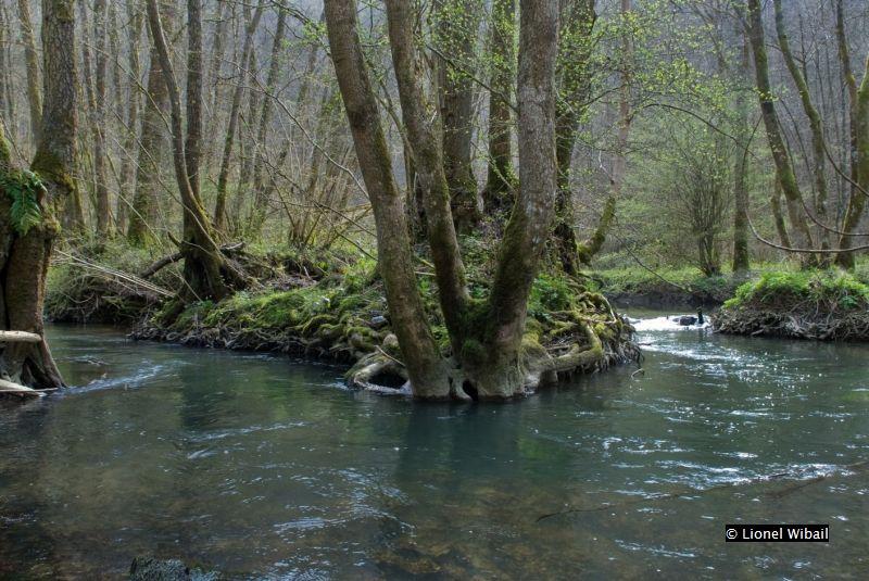 forêt alluviale - 91E0