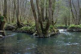 Forêt alluviale.jpg