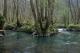 G1.2 - Aulnaies-frênaies alluviales et forêts mélangées à chêne-orme-frêne