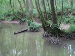 Forêt alluviale