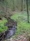 Forêt-galerie des ruisseaux de source [copyright Wibail Lionel]