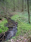 Forêt-galerie des ruisselets.JPG