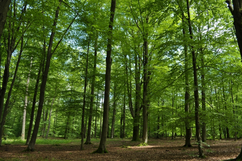 Forêt Spa DSC_1799
