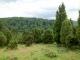 F3.16b - Formations à [Juniperus communis] sur sols calcaires