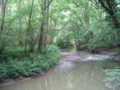 G1.213 - Frênaies-aulnaies des cours d'eau lents