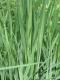 E2.11ba - Prairies pâturées permanentes pas ou peu fertilisées (Junco-Cynosuretum)