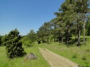 Site Thérimont (SGIB 1350) au printemps 2010