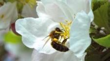 accueil_abeille_butinage