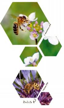 apiculteur_visuel