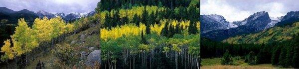 Représentation des niveaux de la biodiversité