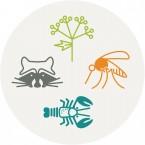 Focus sur quelques espèces