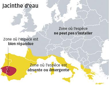 jacinthe-carte