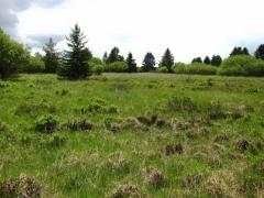 Lande humide dégradée à Molinia caerulea [copyright]