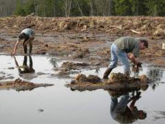 Plantation de linaigrettes
