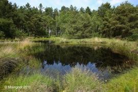 lunulatum habitat