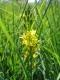D2.25 - Bas-marais à [Narthecium ossifragum] et [Trichophorum cespitosum]