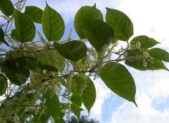 plante_240