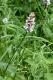 E2.23 - Prairies de fauche sub-montagnardes peu fertilisées