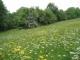Prairie de fauche moyennement fertilisée