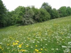 prairie de fauche moyennement fertilisée [copyright Wibail Lionel]