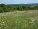 E - Prairies et pelouses